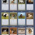Love-Of-Dogs-2019-Lang-Kalender-2